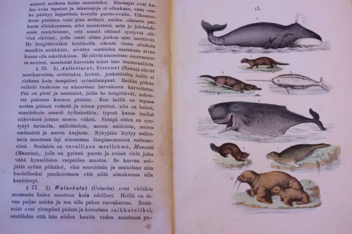 Murman J. V. 1866: Luotuis-Oppi Suomalaisille Alkeiskouluille. 1. Nisäkkäät ja linnut. Turku: J. W. Lillja.